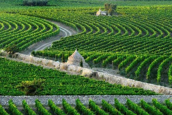 Vignole d'Amastuola (Italie)